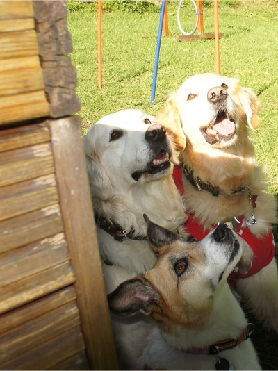 5.1. good dogs - HOCHFORMAT - Neu